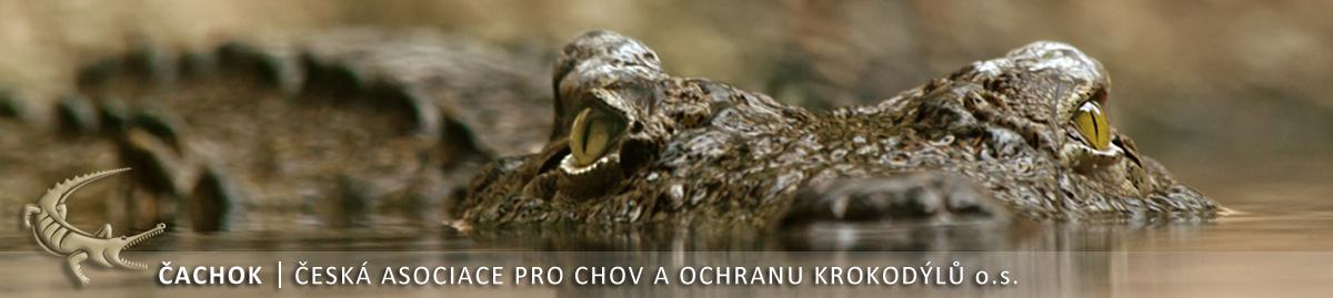 www.czechcrocs.cz